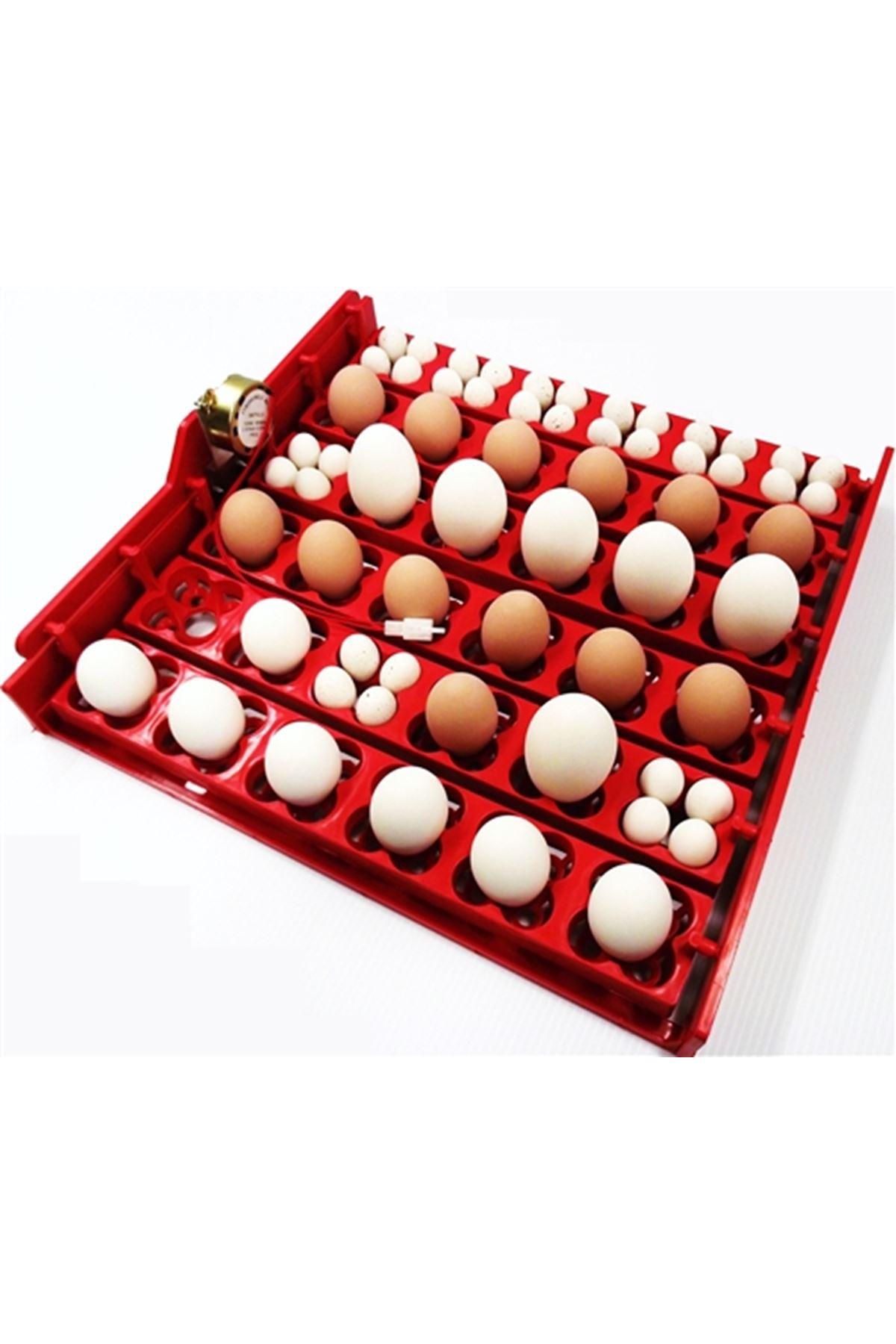 36 Yumurtalık Viyol